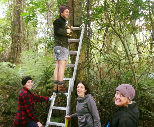 A volunteer crew install fresh boxes in Aongatete forest ahead of the rifleman nesting season in 2020