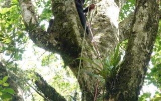 Emma Cronin hoists a baby plant that is destined to grow into an epiphyte up in the canopy